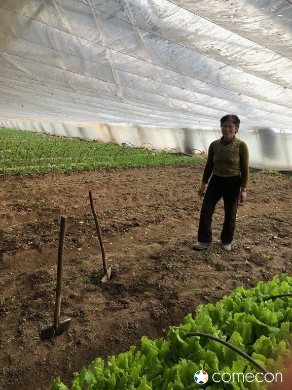 Agricultura in Nord Corea